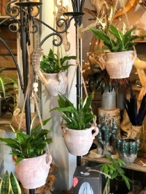 Hanging pot with peace lily   £19.95