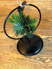 Hanging air plant   Round